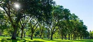 Favorite Tree Campus USA | SOURCE