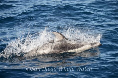 Party Boat Fishing Charters Near Me by Private Charter Boats San Diego Private Charter Boats