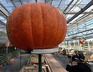 World's Largest Halloween Pumpkin, Grown in Intelligent ...