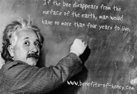 Did Albert Einstein Ever Link Doom Of Human Race To Bees?
