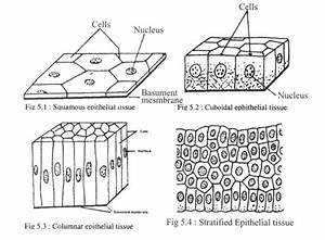 Structural Characteristics  Function And Location Of