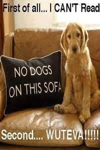Cute Funny Puppy Meme