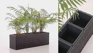Balkonkästen Winterhart Bepflanzen : neu blumenkasten in polyrattan balkonkasten aus ~ Lizthompson.info Haus und Dekorationen