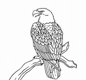 Disegno di Aquila su un ramo da Colorare Acolore com