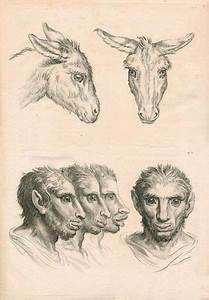 Mutants And Magic  The Beastmen Drawings Of Charles Le Brun