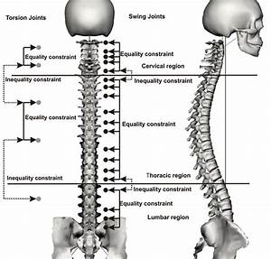 Human Spine Picture - America's Best Lifechangers