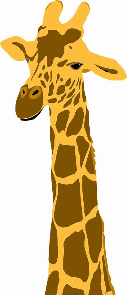 Giraffe Transparent Background Clipart Illustration Silhouette Illustrated