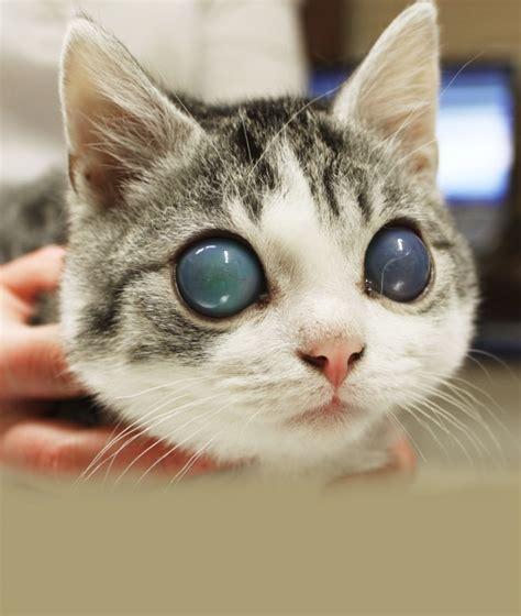 das glaukom als schmerzhafte erkrankung hundkatzepferd