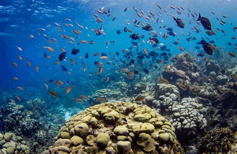Successful Coral Sowing Reef Regeneration Trial in Curaçao - Curaçao Chronicle