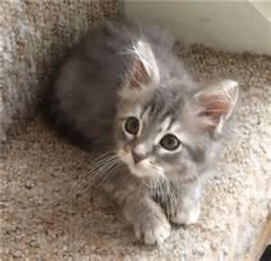 free cats me kittens for me free kittens kittens for