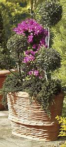 670 best images about Garden Oasis on Pinterest