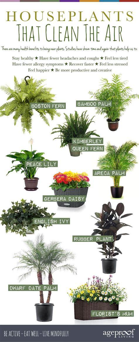 easiest indoor flowers download best indoor plants slucasdesigns com