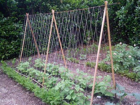 How To Make A Tomato Trellis  Diy Garden Tips