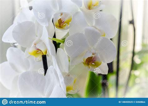 orchid windowsill indoor plant exotic decoration