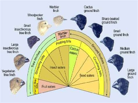 Teorija evolucije