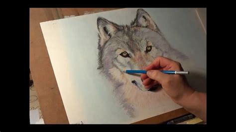 fast drawing wolf  soft pastelwmv youtube