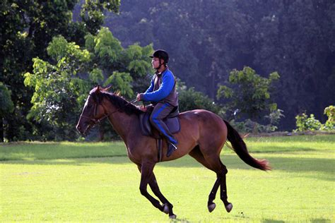 horse riding boarding
