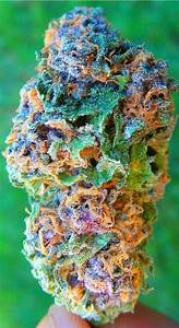 Bester Cannabis Dünger : best 10 weed ideas on pinterest pipes weed seeds ~ Michelbontemps.com Haus und Dekorationen