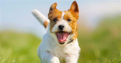 leash dog park reopens  kelowna