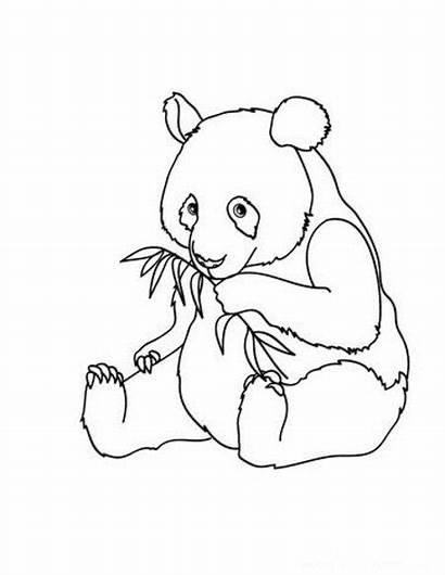 Panda Coloring Pages Disney Pandas Bear Animal