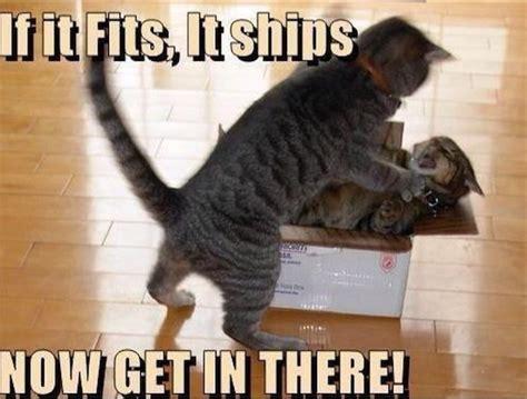 funny cat memes    day  viraler