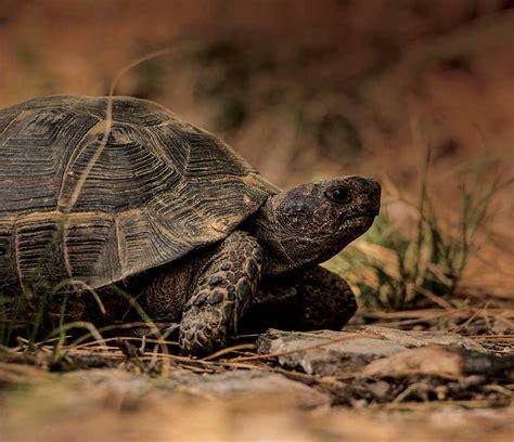 responsible reptile amphibian keeping  environmental