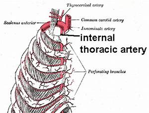 File:Internal mammary branch.png - Wikimedia Commons