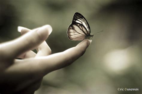 segi4 kupu kupu pelajaran dari seekor kupu kupu jurnal madi
