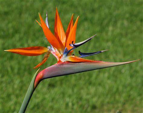 cute bird  paradise flower   fun