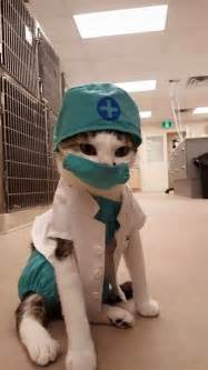 the cat doctor 25 best ideas about cat costumes on cats in