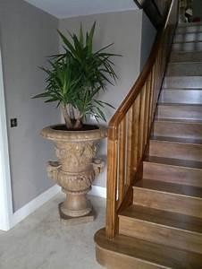 Pflanzen Im Treppenhaus : palmlilie eine bezaubernde zier und nutzpflanze pflanzen und blumen pinterest pflanzen ~ Orissabook.com Haus und Dekorationen