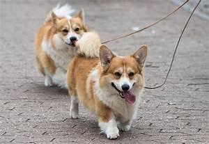 dog breeds ranked
