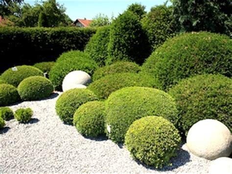 planter un buis en pot pergola et nouveau salon de jadin sous le soleil exactement le grand rauracsuisse 14 novembre
