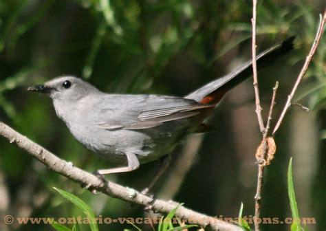ontario bird photos