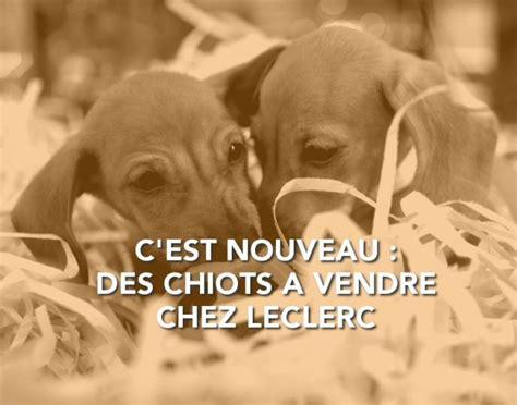 animalerie chien a vendre le site des animaux