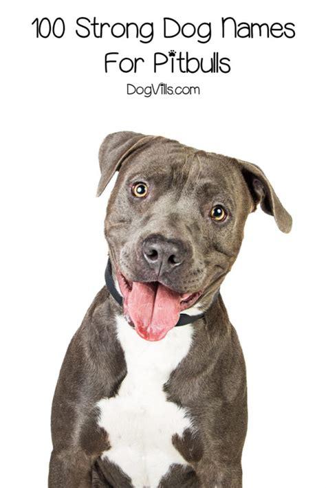 strong dog names  pitbulls dogvills