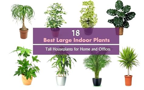 low light indoor plants safe for cats awesome best large indoor plants contemporary interior