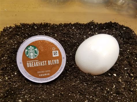 Egg shells are alkaline, while coffee is acidic. Eggshells and used coffee grounds make the best, AND FREE, fertilizer for plants and herbs. Some ...