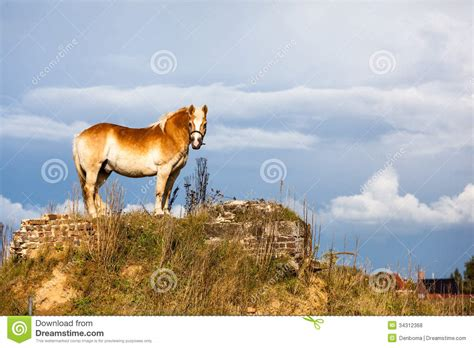 horse equidae species ungulates ungulate current domesticated