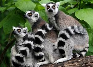 Weird Funny And Absolutely Unique Animals Of Madagascar
