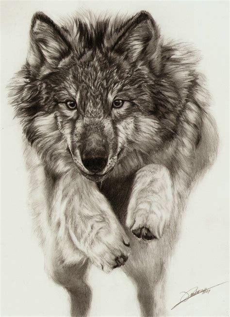 beautiful wolf drawing wolf art pinterest wolf