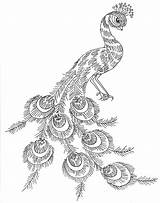 Peacock Drawing Embroidery Patterns Body Neck Around Pattern Hand Designs Peacocks sketch template