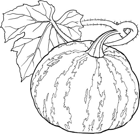gourd coloring pages  getcoloringscom  printable colorings pages  print  color