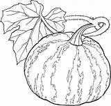 Coloring Vegetables Pages Vegetable Gourd Adult Fruits Fruit Basket Printable Coloriage Printables Fall Related Getcolorings Legumes Excellent Getcoloringpages Getdrawings sketch template