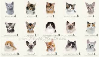 types of domestic cats view site