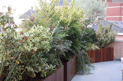 piante terrazzo giardini pensili e spazi verdi in terrazzo a filo