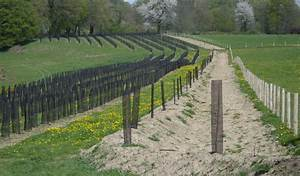 Filet Pour Arbre Fruitier : protection des plants et arbustes agroplast ~ Melissatoandfro.com Idées de Décoration