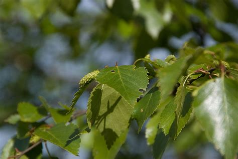 A gallery focusing on the leaves from different native ...