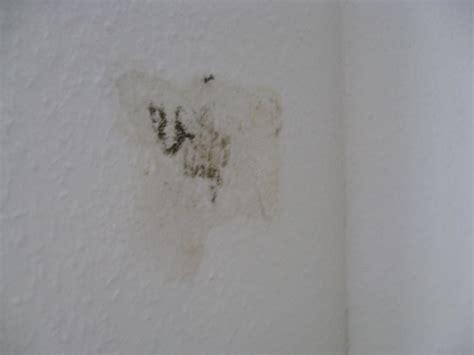 schimmel in der wand beseitigung schimmel an der wand maler org
