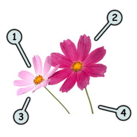 draw cartoon flowers